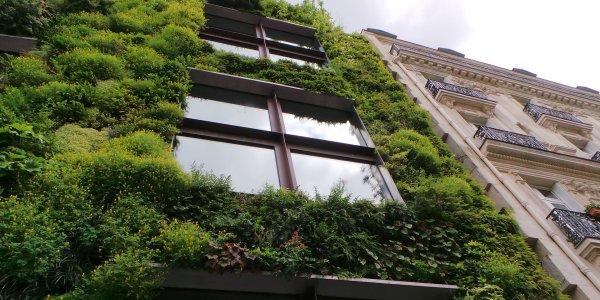 Les murs végétaux : de la verdure à la pointe de la technologie